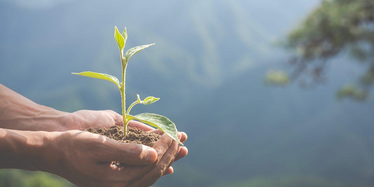 https://ettorefieramosca.it/wp-content/uploads/2021/06/environmental-conservation-garden-children-1280x640.jpg