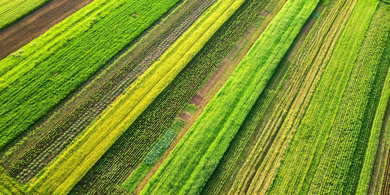https://ettorefieramosca.it/wp-content/uploads/2021/09/aerial-view-of-green-agricultural-fields-in-spring-with-fresh-vegetation-after-seeding-season-on-a-warm-sunny-day-1280x640.jpg